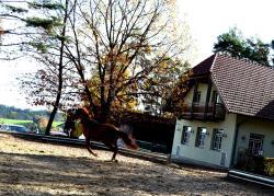 Römerhütte, Riegl 25, 8242, Sankt Lorenzen am Wechsel