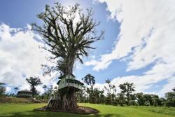 Lupe Sina Treesort, PO Box 2518, 00000, Tiavi
