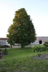 Chambres d'Hôtes de l'Epine, L'Epine, 16300, Barbezieux