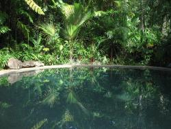 Daintree Rainforest Retreat Motel, 336 Cape Tribulation Road, 4873, Cape Tribulation