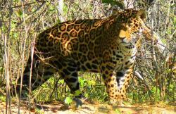 Pousada & Camping Santa Clara -Pantanal Sul, Estrada Parque KM22, 79060-680, Boa Sorte