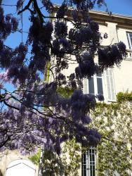 Chambres d'hôtes Maison Auguste, 68 rue Auguste Girard, 13300, Salon-de-Provence
