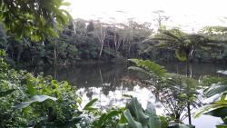 Colo-I-Suva Rainforest Eco Resort, Princes Road, Colo-I-Suva,, Suva