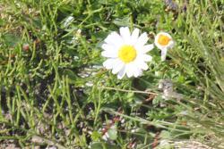 La Marguerite, Navette, 73260, Aigueblanche