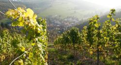 Weingut Hees - Landgasthof Zum Jäger aus Kurpfalz, Zur feuchten Ecke 6, 55569, Auen