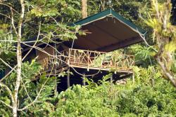 Rafiki Safari Lodge, 3 km up river of Santo Domingo, Lower Savegre Valley, 96350, Savegre