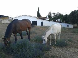 Casa Rural La Vallejera, Km. 15,300 de la Ctra. EX-203 de Plasencia a Jaraiz de la Vera, 10420, Tejeda de Tiétar