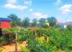 Shapotou Damo Qingyuan Farmstay, 500 Metres South of Shapotou Scenic Area, 755000, Zhongwei