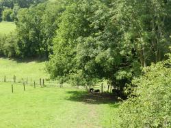 Xhawirs Horse Farm, Route Des Xhawirs 96f, Xhendelesse, 4652, Soumagne