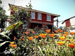 Guest House Guriis Khibli, Village Dvabzu, 5 km from Ozurgeti, 3509, Ozurget'i