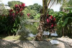 Granja Hostal Tolcaribe, Vereda Palmar Arenosa, 733570, Guamo