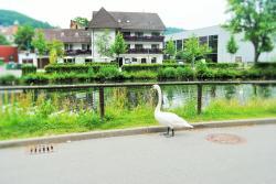 Hotel Schiff Nagold, Unterm Wehr 19-21 , 72202, Nagold