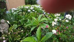 Terrigal Secret Garden, 37 Port Jackson Road, 2260, Terrigal