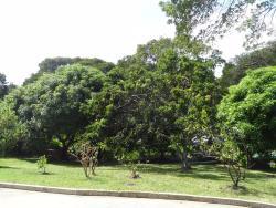 Sion Hill Plantation, Sion Hill Plantation, BB24025, Saint James