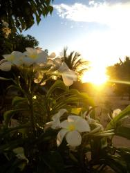 Pousada Flor do Bosque, Rua Flor do bosque , 234, 59162-000, Pium de Cima
