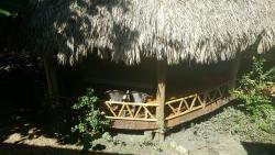 Iguana Yard, San Ignacio, Bullet Tree Falls,, Bullet Tree Falls