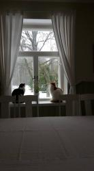 Hostel Panget, Täysihoitolantie 6, 25870, Dragsfjärd