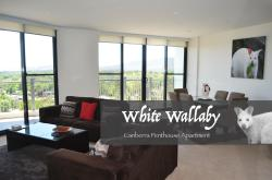White Wallaby, 339/1 Mouat St, 2603, Canberra