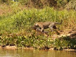 Jaguar House Boat - Pantanal, Estrada rural s/n Campping Jaguar House Buot House, 78200-000, Bracinho