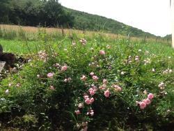 Domaine La Rose, Bon repos Les Magettes Nord, 82160, Caylus