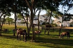 Polo Villa #5, Apes Hill Club, BB24018, Saint James