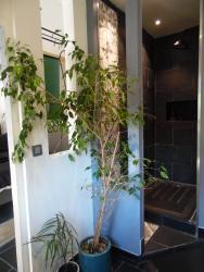 Le Jardin Suspendu, 6 Impasse de la Viguerie, 34150, Gignac