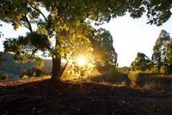 Clarendon Forest Retreat, 150 Coates Road, 2428, Possum Brush