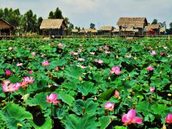 Hai Lua Homestay (Lotus Lake Homestay), Hamlet 4,, Tan Kieu Commune,, Ấp Tháp Mười