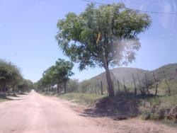 Alto del Carmen, Calle publica S/N, 5284, Cruz de Caña