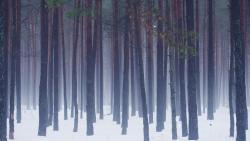 Beloe Ozero, Brestskaya oblast Luninetskiy rajon Bostynskiy selsovet 7, 7,1 km severnee agrogorodka Lunin, 225644, Luninyets