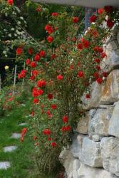 Les Murets, 70 Promenade des Vignes, 3968, Sierre