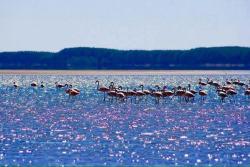 Haras Itapuã sul, Km 299 ,rodovia mercosul Parque nacional da lagoa do peixe, 96290-000, Tavares