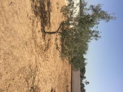 Renovated Djerbian farm, vers Sidi Mansour road, 4180, Taguermess
