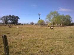 La Ofelia, Ruta 8 Km 111.9 Posta de Morales, 2760, San Antonio de Areco