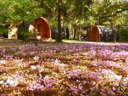Cabanes des châteaux, 5 route de villesavoir, 41150, Chouzy-sur-Cisse