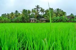Rice Villa, 21st Mile post, Jayanthipura, 51000, Jayanthipura