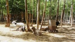 Casita en el Bosque, Cuartel 12 El Paraiso, Estancia Estrella Federal, ruta 9, km 205, 2916, Ramallo