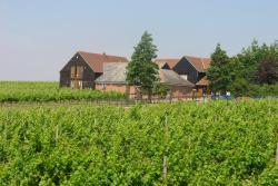 Mersea Island Vineyard, Mersea island Vineyard Rewsalls Lane, CO5 8SX, East Mersea