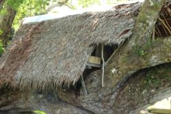 Tree House Bungalow, P.O Box 994 ,Luganville santo,, Port-Olry