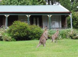 Cedar Lodge Cabins, 42 Great Western Hwy, 2786, Mount Victoria