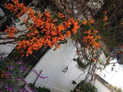 Mansion Samzara Hosteleria, Calle Otavalo Antonio Tandazo, 170105, Sangolquí