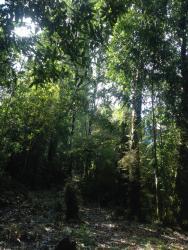 Cabañas El Mirador, Ingenieros Militares S/N, Hornopiren, 5860000, Río Negro