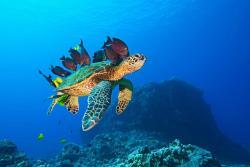 Equa Reef Maldives, Rasma/Feydhoo, 20012, Maradhoofeydhoo