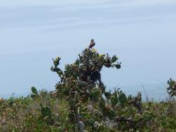 Apto em Ervino - Praia Grande, R. Ubatuba, 103 Praia do Ervino, 89248-000, Praia Grande