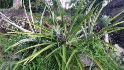 Cozy Island Bungalow, La gogue , Anse Etoile,, Anse Etoile