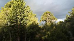 Sueño de Pehuenia, camino de las cinco lagunas Laguna Chica, La Angostura, 8345, Villa Pehuenia