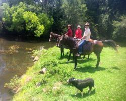 Maleny Springs Farm, Denning Road, 4552, Maleny