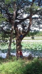 Fehi Dhuniye - The Green World, Street Number 15 Kouk Chak, Veal Village,, Phumĭ Kruŏs