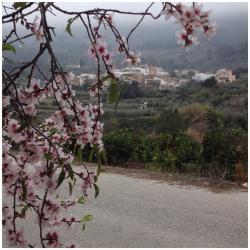 Casa Rural Estrella, Carrer Trinquet, 40 Vall de Gallinera, 03788, Beniali