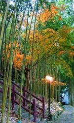 Da Kuan Peach Farm Resort, No. 189, Shenmu road, Hualing Village, 33644, Fuxing